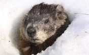 Groundhog... Come Out & Share | Keeping Current Matters
